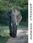 Small photo of Tusker elephant in Yala National Park, Sri Lanka