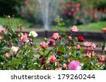 Stock photo garden of roses 179260244