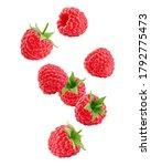 Falling Raspberry Isolated On...
