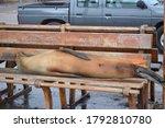 A Sea Lion Sleeps On A Bench...