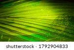 Bokeh Image  Light Green In The ...