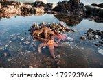 Seastars Are Found In A Tide...