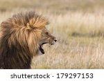 Stock photo portrait of a roaring male lion 179297153