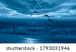 Silhoutte Of Beautiful Dolphin...