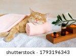 A cat sleeps resting his head...