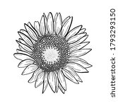 doodle black line blooming... | Shutterstock .eps vector #1793293150
