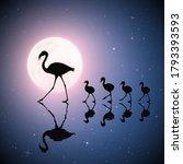 Flamingo Family On Lake. Birds...