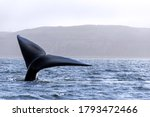 Whale Tail   Whale Watching...