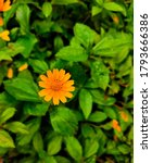 Orange And Yellow Flower In Its ...