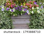 Beautiful Summer Flowers And...
