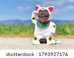 Happy Smiling French Bulldog...