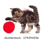 Stock photo cute little kitten with thread ball isolated on white background 179394356