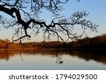Silhouette Of A Tree Over The...
