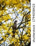 Woodpecker Resting On A Branc...
