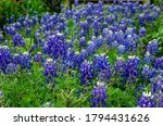 Lovely Flowers Blooming In The...