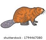 beaver rodent mammal. scratch... | Shutterstock .eps vector #1794467080