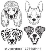 a set of 4 dog's faces  poodle  ... | Shutterstock .eps vector #179465444