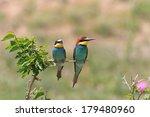 european bee eater  merops... | Shutterstock . vector #179480960