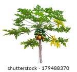 Papaya Tree Isolated On White...