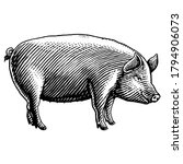pig vector engraving hand drawn ... | Shutterstock .eps vector #1794906073