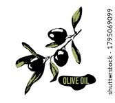 packaging design with olive oil ... | Shutterstock .eps vector #1795069099