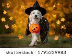 Happy Dog In Halloween Costume...