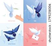 Pigeons Flat 2x2 Design Concept ...