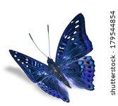 Beautiful Butterfly Flying...