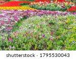 beautiful flowers background.... | Shutterstock . vector #1795530043