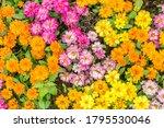 beautiful flowers background.... | Shutterstock . vector #1795530046