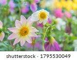 beautiful flowers background.... | Shutterstock . vector #1795530049