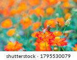 beautiful flowers background.... | Shutterstock . vector #1795530079