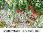 beautiful flowers background.... | Shutterstock . vector #1795530103