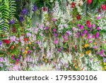 beautiful flowers background.... | Shutterstock . vector #1795530106