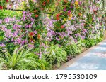 beautiful flowers background.... | Shutterstock . vector #1795530109