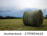 Freshly Cut And Rolled Bale Of...
