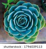 Beautiful Symmetrical Plant...