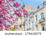 A branch of the cherry blossoms. Spring in the city. - stock photo