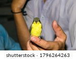 A Beautiful Humming Bird Littl...