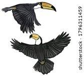 Tropical Bird Toucan Watercolor ...
