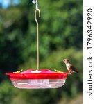 A Small Hummingbird Standing...