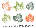stamp of asymmetric maple leaf  ...