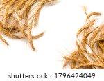 Wheat Rye Barley Oat Seeds....