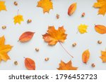 Autumn Composition On White...
