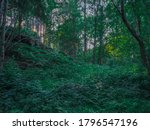 View Of A Green Lush Forest...