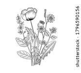 vector drawing floral vintage... | Shutterstock .eps vector #1796590156