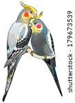 pair of cockatiel parakeets ... | Shutterstock .eps vector #179673539