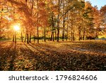 Warm Autumn Scenery In A Forest ...