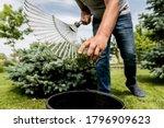 Gardener Raking Cutting Leaves...