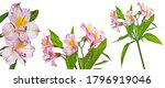 alstromeria flowers isolated on ... | Shutterstock . vector #1796919046